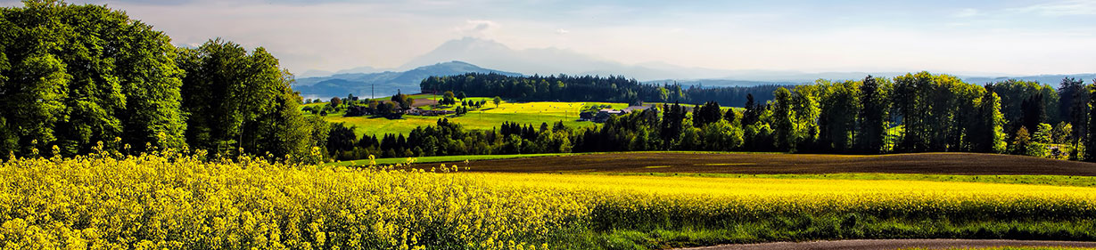 paysage-printemps-2020