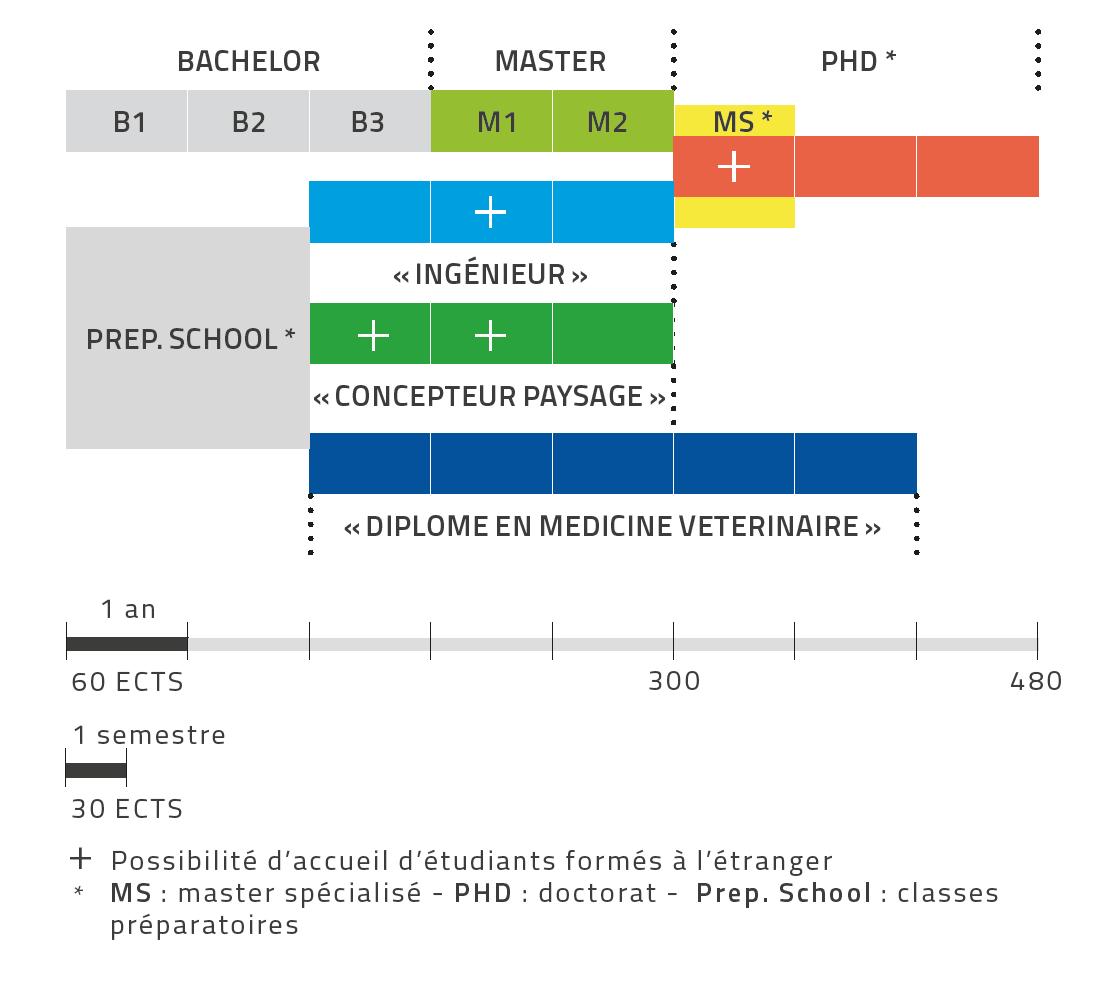schema-equivalence-diplomes