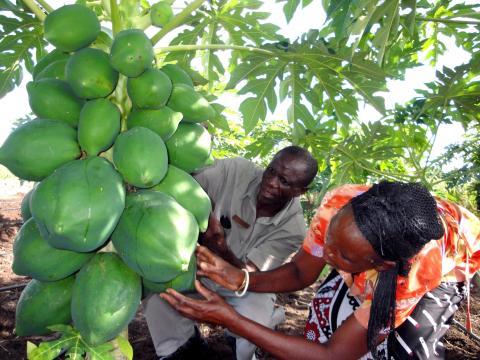 agriculteurs-afrique