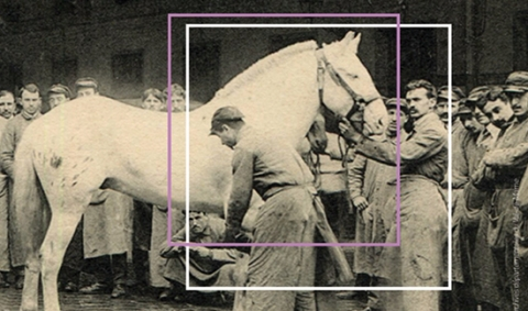 cheval-photo-ancienne