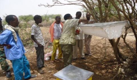 somalie-apiculture