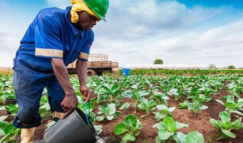 horticulture-kenya