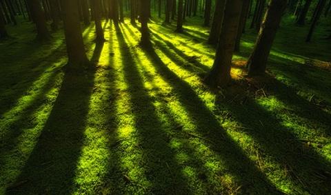 arbres-foret