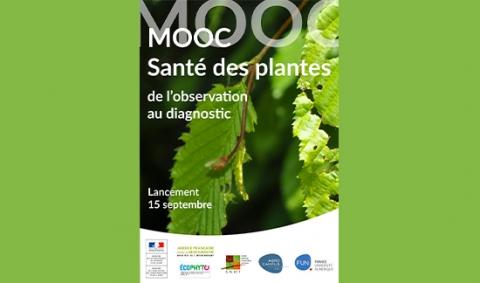 image-moon-santé-des-plantes;de-l'observation-au-diagnostic