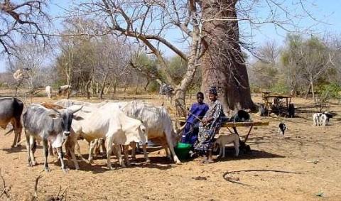 pastoralisme-et-zones-seches-afrique-ouest