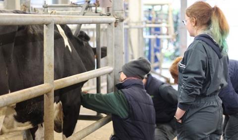 vache-veterinaires