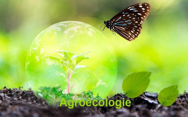 Webinaires sur la thématique Agroécologie